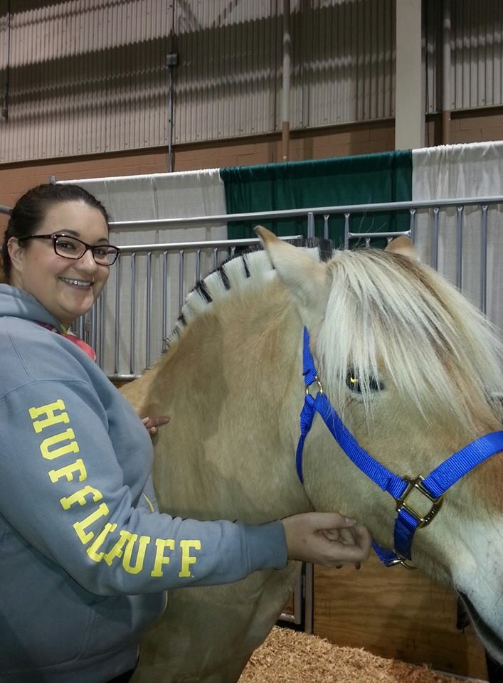 Fjord horse at the Horse World Expo